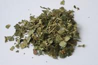 Witch hazel tea